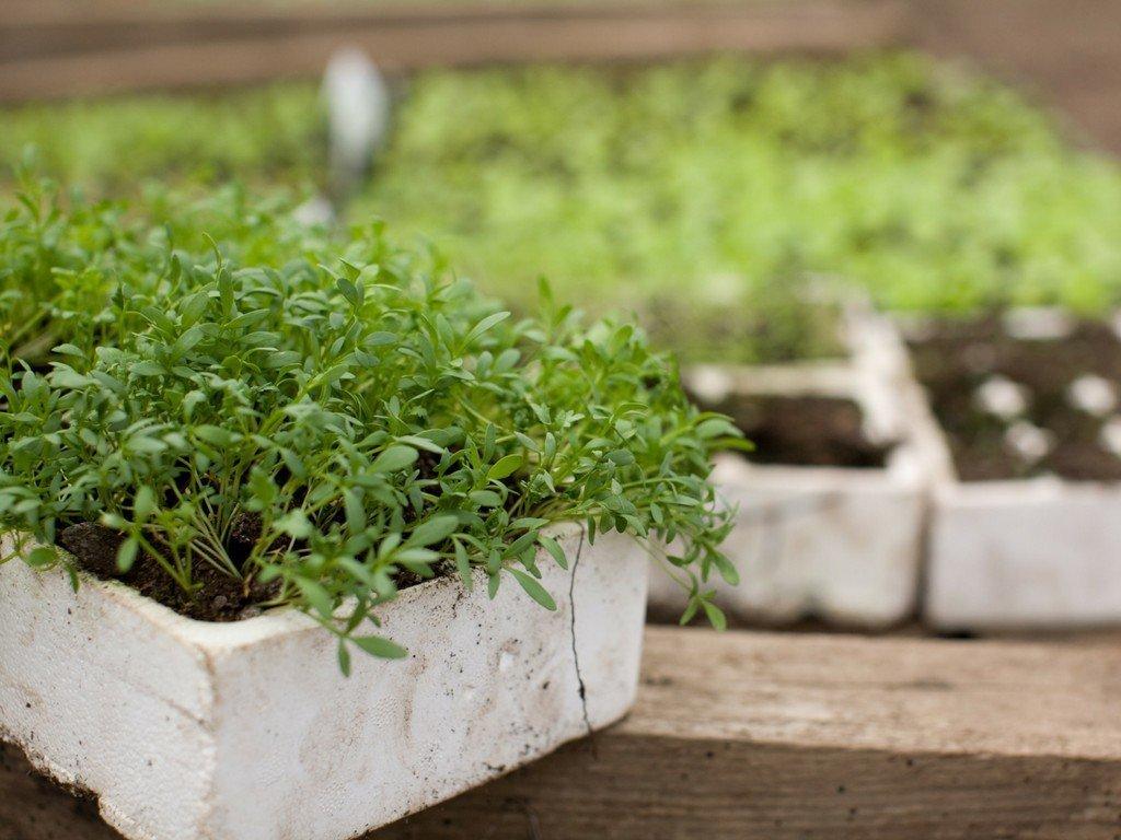 Seedlings at Channel Farm