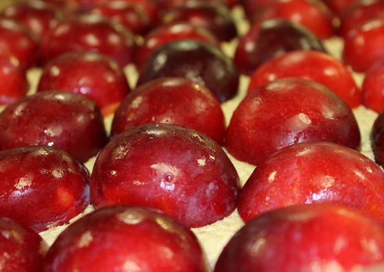 Our gluten-free plum slice