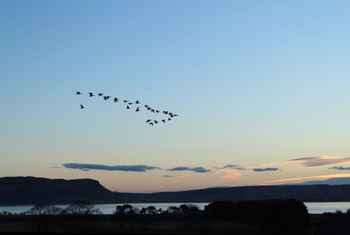 Birds flying over Loch Leven at sunset